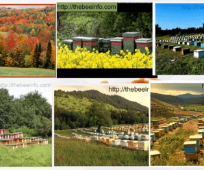 How The Beehive Property Management In Different Seasons – Top Bar Hive Management. (112)