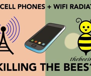 Honey Bee Infestation, Chemical And Cell Phone Effects, And New Medicine To Fight Against Diseases Naturally. (123)